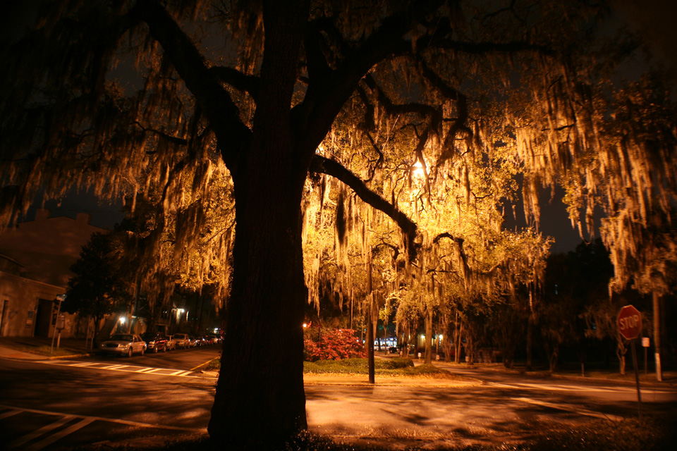 Night in Savannah 047